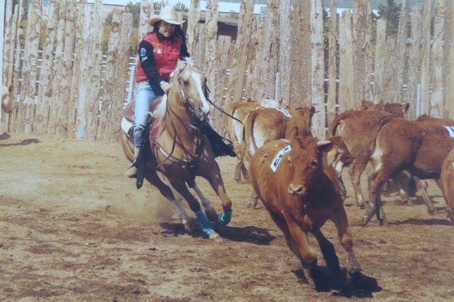 Cavallo durante una gara di equitazione a San Francesco al Campo