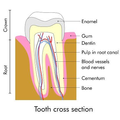Root Canals Fayetteville, NC