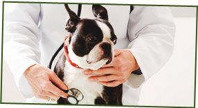 animal care - brixham - Animal Health Centre  - terrier