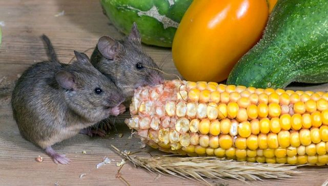 Preventing Pests: How To Keep Mice And Bugs From Coming In