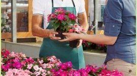 vendita di fiori in serra