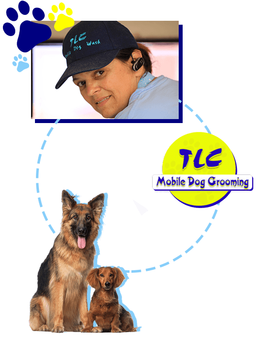 Dog grooming in carrara tlc mobile dog grooming tlc mobile dog grooming is not a franchise solutioingenieria Choice Image