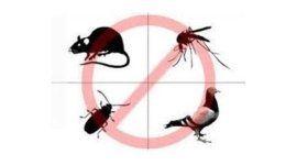 Un cartello di divieto con una blatta, un ratto, un piccione e una zanzara