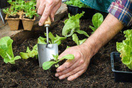 Giardiniere pianta piccoli fiori