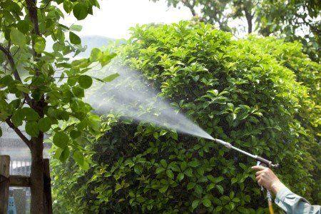 Giardiniere cura albero