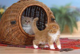 kittens in a cat basket