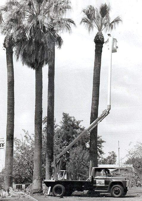 Tree trimming | Hanford, CA | Arnold's Tree Service