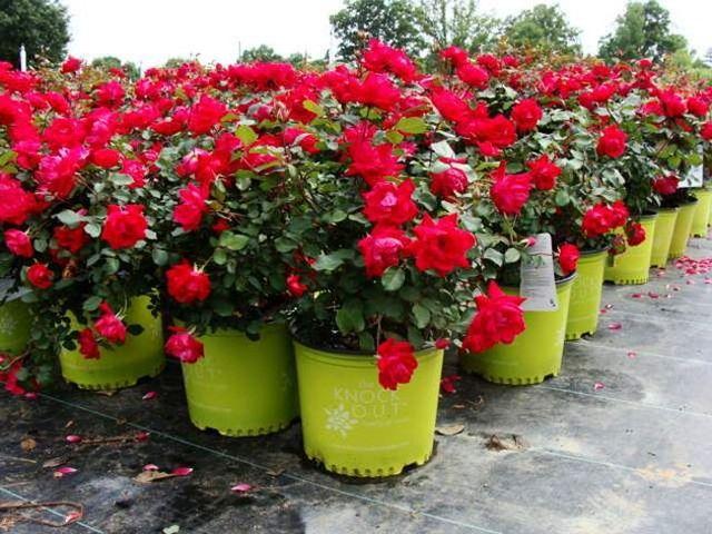proposte per il giardinaggio Aratari Vivai a Misano Adriatico Rimini