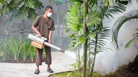 disinfestazione da formiche, disinfestazione da vespe, disinfestazione da zanzare