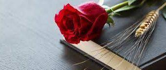 rosa rossa e spiga di grano