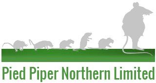 Pied Piper Northern Limited logo