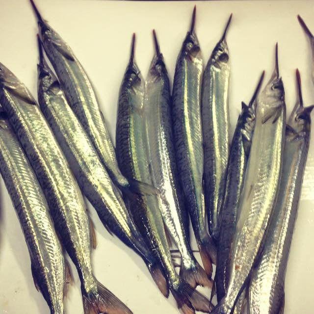 quality fish