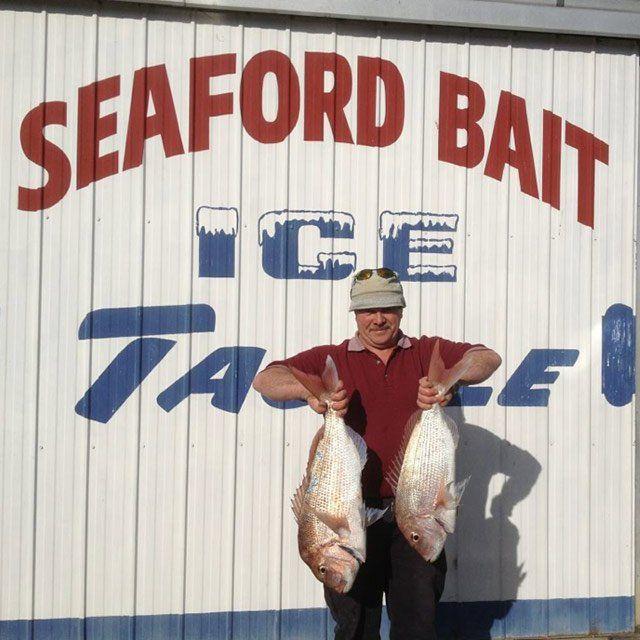 seaford bait fish