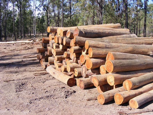 Stack of timber in open