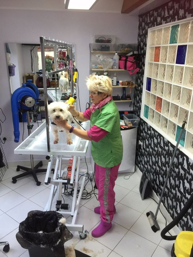 Calm and very clean dog grooming salon dog breeds picture for A salon enfield ct