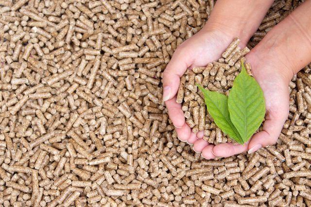 Mani raccolgono pellet e due foglie