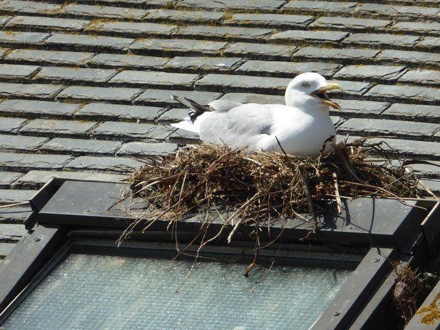 Bird Proofing Solutions