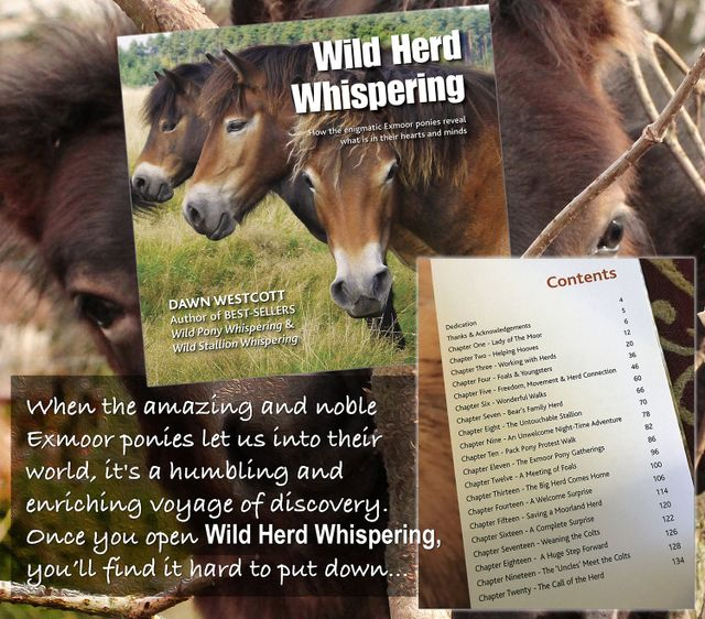 For Once Join Herd >> Wild Herd Whispering By Dawn Westcott