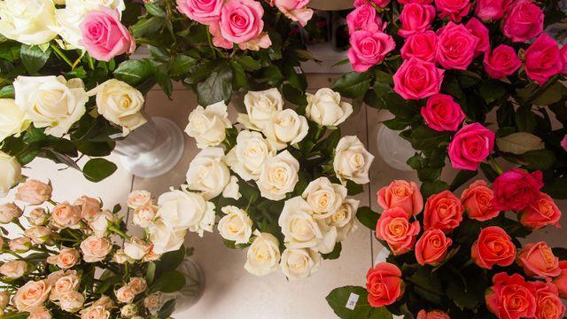 Raccolta di splendide rose da vendere ad un negozio di fiori