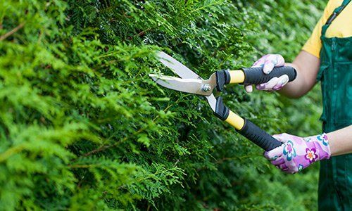 Un impiegato con forbici-one da potatura, mentre taglia un cespuglio