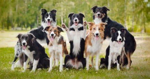 Four Paws Dog Training Chesapeake Va