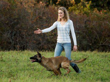 Dog Training Clifton Park, NY