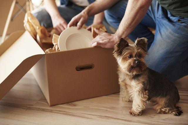 una coppia, con un cucciolo di Yorkshire a fianco, prende degli oggetti da uno scatolone