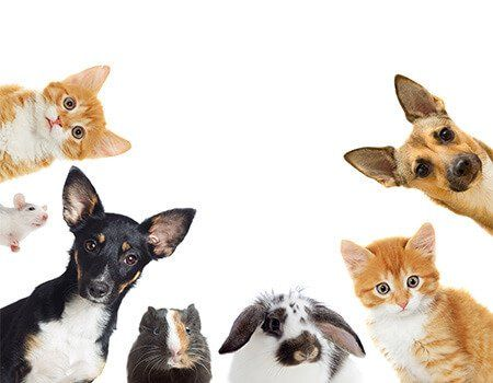 cats, dogs,a rabit, a guinea pig and hamster