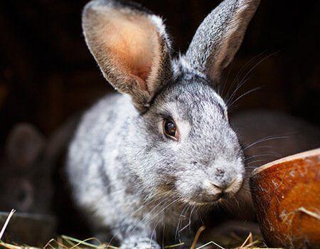 cute rabbit eating