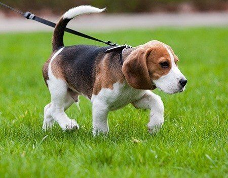 Walks Suitable For Dogs Uk