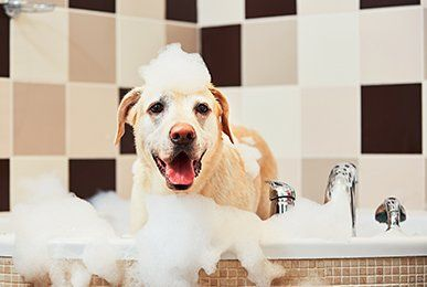 Home reno nv kristis pet grooming dog grooming dog taking a bath in reno nv solutioingenieria Gallery