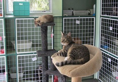 Cattery in Palmerston North