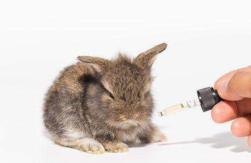 coniglio che riceve gocce farmaceutiche