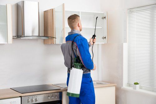Expert spraying pesticides in kitchen