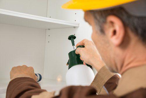 Expert providing pest control