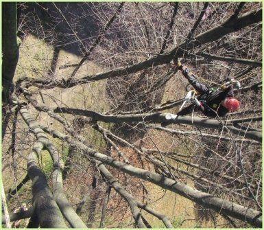 arboricoltura