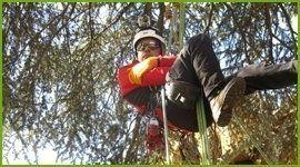 arboricoltore