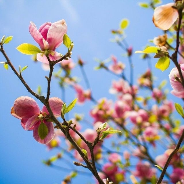 Aldersgate village Life Plan Community Flowers