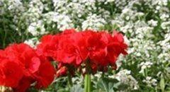 fiori-e-piante