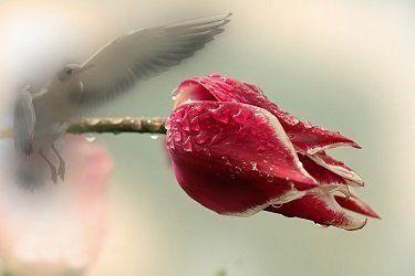 affordable cremation bird flower
