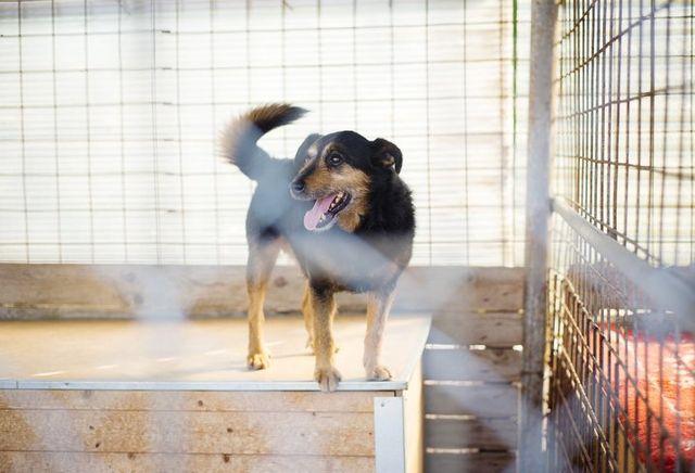 dog boarding Pensacola, FL