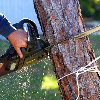 Tree Service Barrington, NH