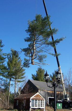 Tree Service Hampton, NH