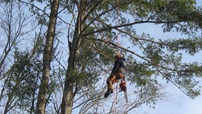 Tree Service Durham, NH