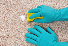 A stain on a carpet being removed