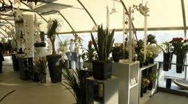 assortimento piante