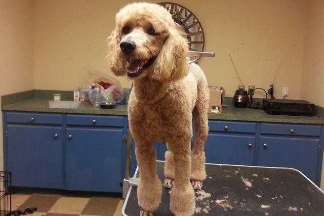 dog grooming in Columbia, SC