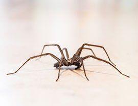 Exterminator Near Sacramento Ca Jones Bros Pest