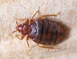 30-day Guarantee — Bed Bug in Rancho Cordova, CA