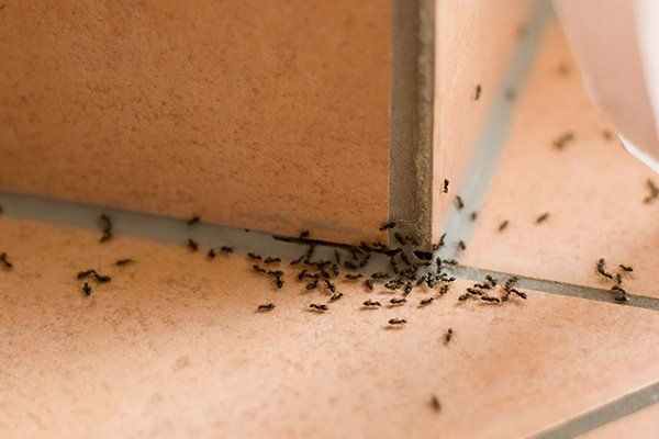 Ant Control — Ants on the Floor in Sacramento, CA